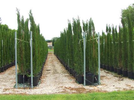 les pépinières michel en vaucluse | grand choix d'arbres, plantes