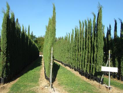 Les p pini res michel en vaucluse grand choix d 39 arbres plantes et horticulture velleron 84 - Plant de rhubarbe a vendre ...