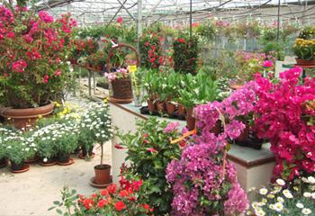 vaucluse 84 jardineries et vegetaux